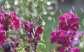 Rain on flowers