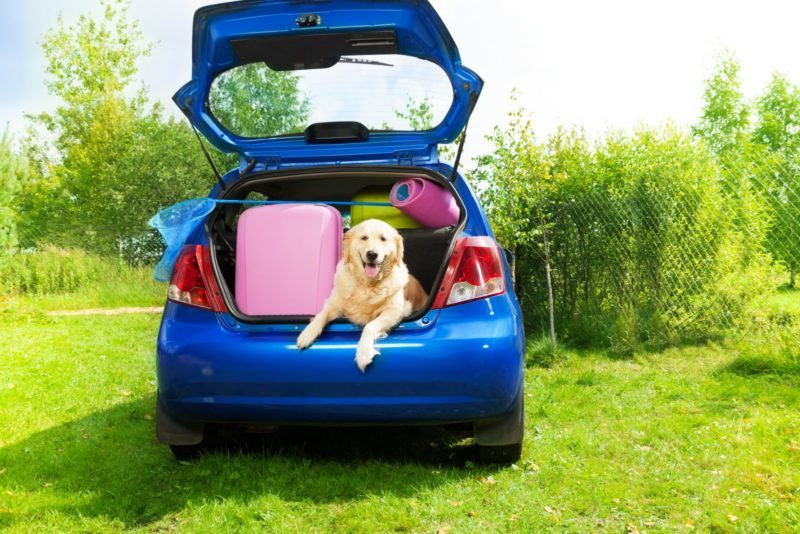 Things You Should Always Carry with You While Driving